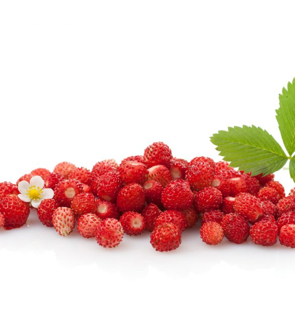 Wild strawberry plant with green leaves and flower, isolated